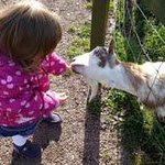freya feeding the goats