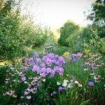 The mystical Garden 2