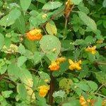Wildflowers galore