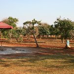 Fruit trees on the grounds