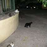 My Dinner with wild cats