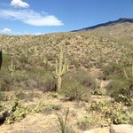 Saguaro and ... Saguaro :)