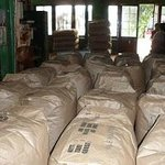 The tea Bags ready for export