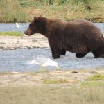 The biggest bear we saw on the trip