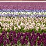 Campo de flores próximo ao hotel - 150 m