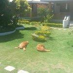 Собаки отдыхают на лужайке