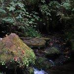 Muson Creek along the path to the falls