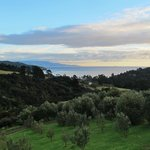 View of Olive Orchard and Ocean from Bedroom