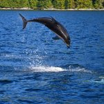 Dolphins dancing.