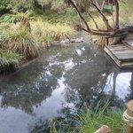 Hot Bush Pool