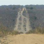 Sand road to Kasane