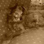 Midullina sul divano