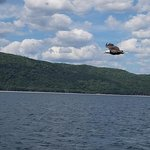 Eagle soaring by Donelda's Boat