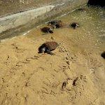 Bali Turtle Conservatory