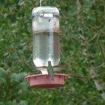 Hummingbird's breakfast