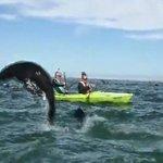 Seals Walvis Bay