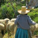 Pastoreando