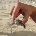 helping to save the turtles