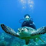 ballade avec une tortue aux îlets