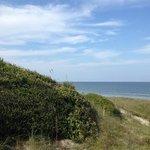 dunes above beach