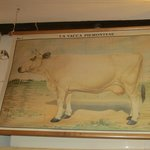 Cow. On the wall.