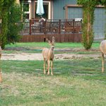 Three of the Six Deer