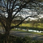 View to Hagley Park from the room