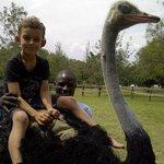 Foto di Maasai Ostrich Resort