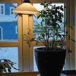Johan Olsen's kitchen window