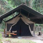 siana springs camp
