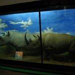 La recreacion de los rinocerontes