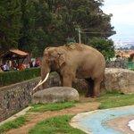 Muy bello el elefante
