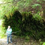 Moss moss everywhere