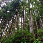 Brautifyl views of woods