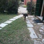 cane della proprietaria; isterico, abbaia a tutti gli ospiti