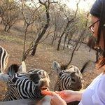 Me with zebras