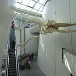 Walfisch-Skelett  __Deko im Ozeaneum
