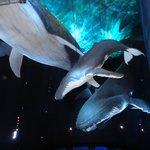 Walfisch Modelle in der Ausstellung