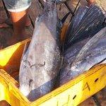 "Malins catch by  ""Bajau Laut"""