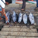 Tunas sold at bargain prices just behind Seafest Hotel