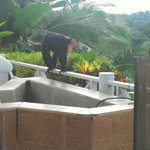 Monkey at our breakfast