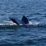 Whale watching off Cape Ann