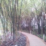 Bamboo passage in the park