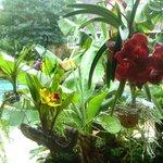 orquídeas en la galería junto a la piscina