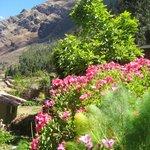 jardines y flores alrededor