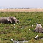Elephant heaven in Amboselli