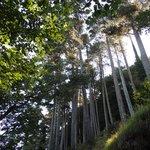 bosco e antenne