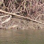 Croc sunbaking