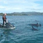 Dolphin escort for Jet Ski - Bay of Islands, New Zealand