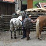 Putzen der Pferde :)